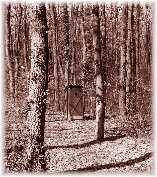 erdő mélyén…